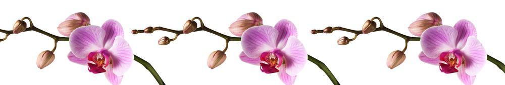 цветы_040
