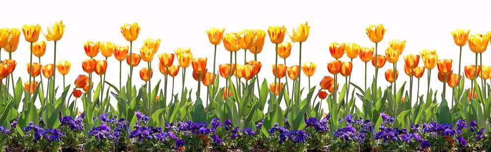 цветы_042
