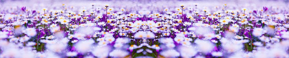 цветы_047