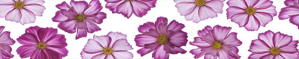 цветы_057