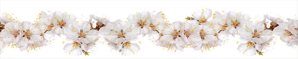 цветы_062