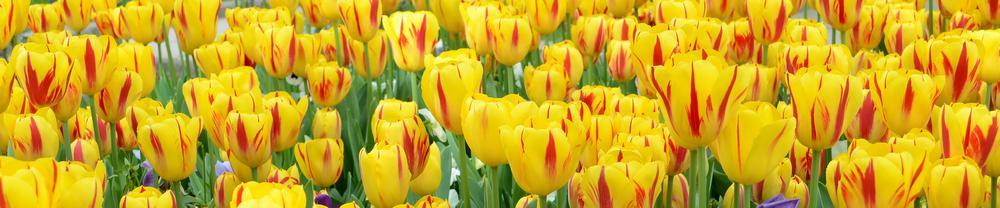 цветы_071