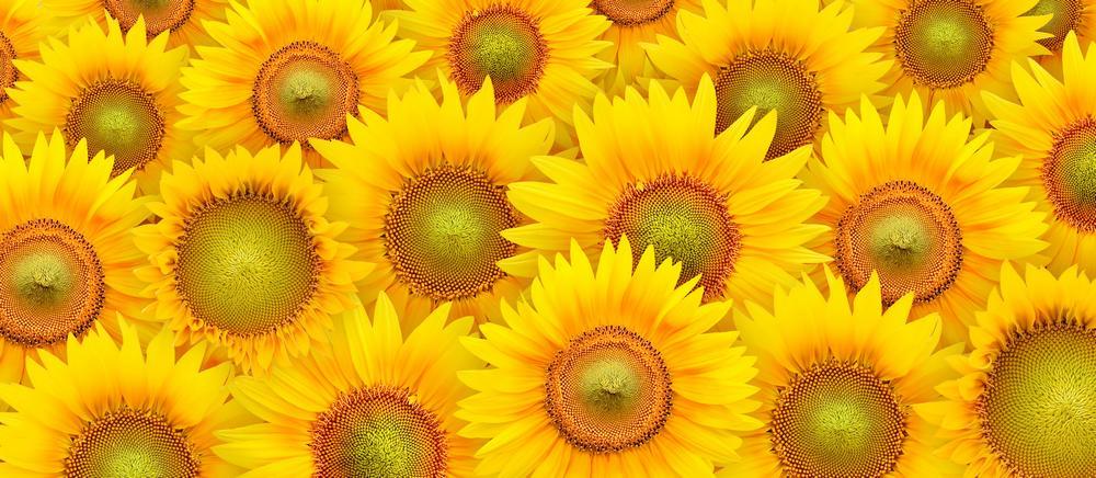 цветы_072