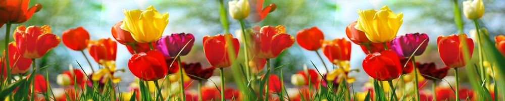 цветы_078
