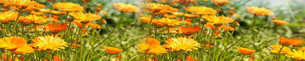 цветы_101