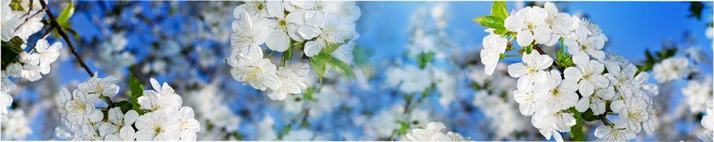 цветы_111