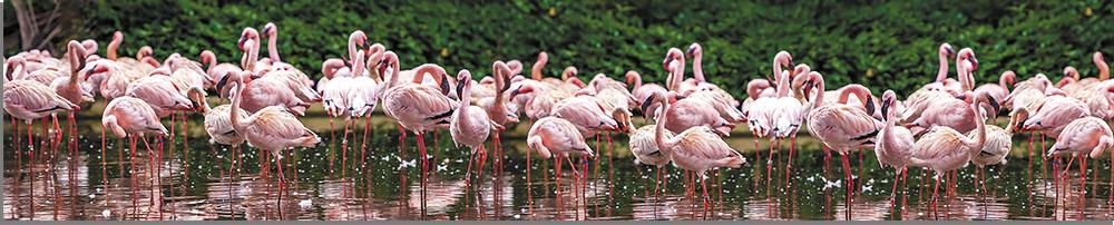 flamingo-park