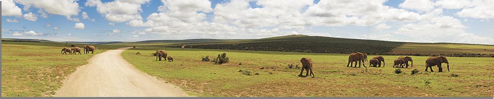 savanna-park