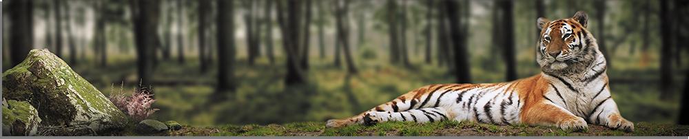 tigr-park