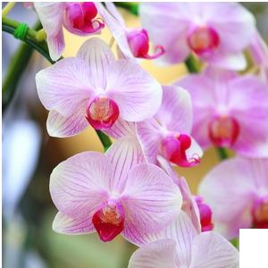 kruglii-stol-cveti